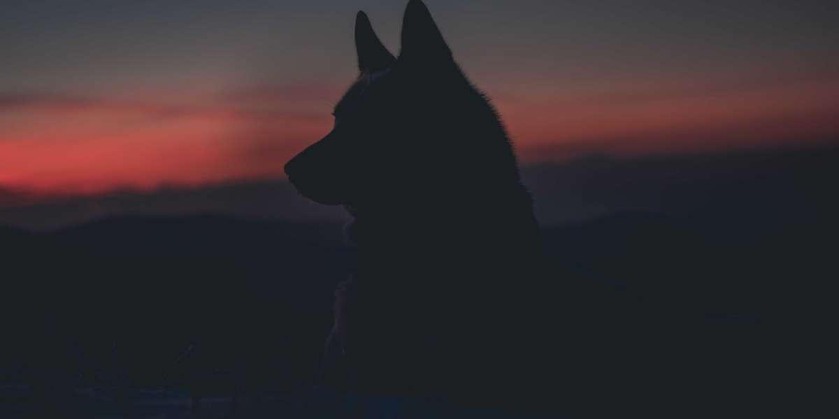 21 Epic Backrounds Epic Wolf W Windows Pro Crack Full Version License Torrent Exe